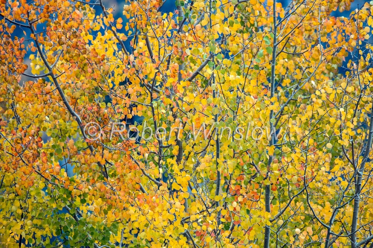 San Juan Mountains Fall Colors 2312W1WM