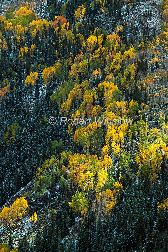 San Juan Mountains Fall Colors 2319W1WM