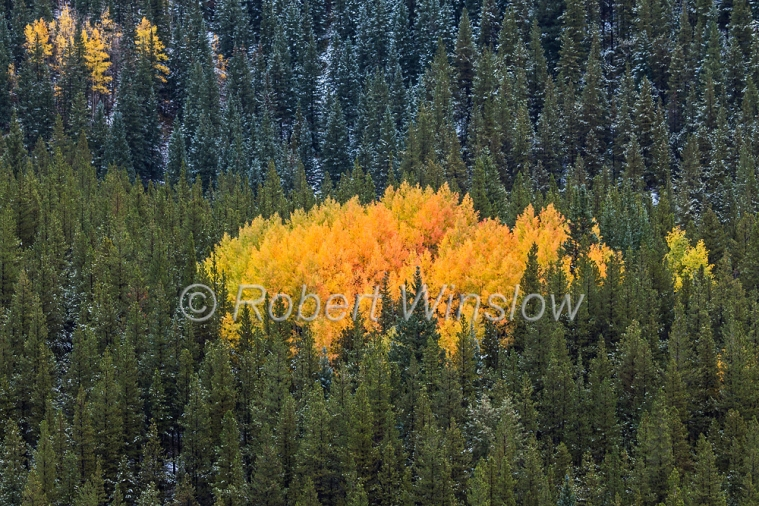 San Juan Mountains Fall Colors 2327W1WM
