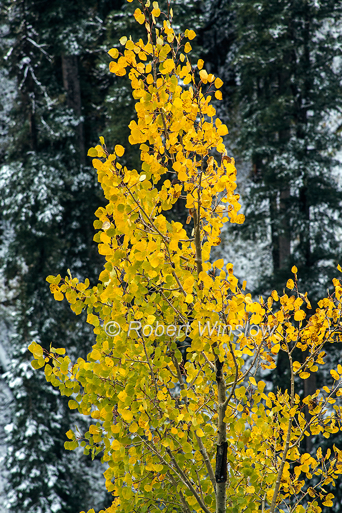 San Juan Mountains Fall Colors 6746W1WM
