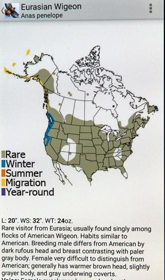 Eurasian Wigeon Range 7381